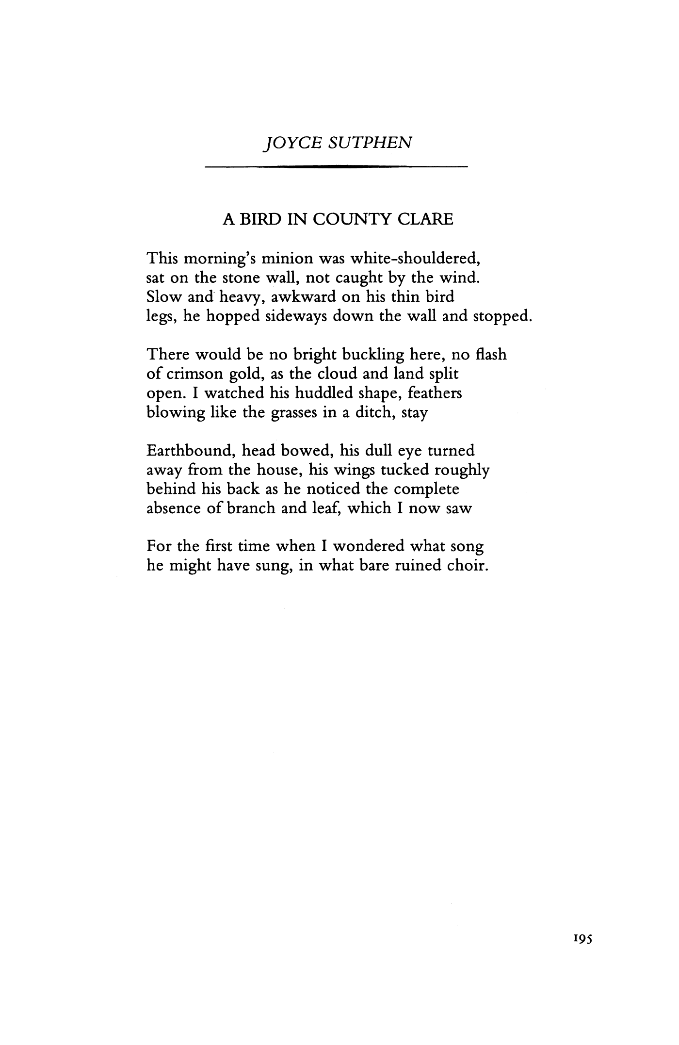 a bird in county clare by joyce sutphen poetry magazine