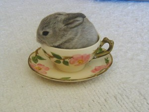 Unrelated But Endearing Photograph of a Bunny in a Teacup