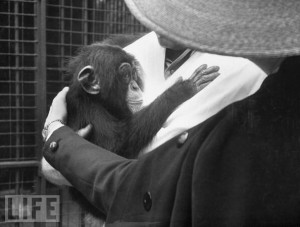 Monkeying around.