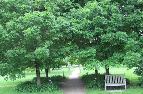World_of_trees_Guelph_Arboretum
