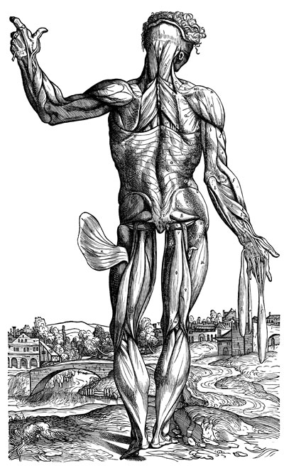The Fabric: A Poet's Vesalius by Heather McHugh | Poetry